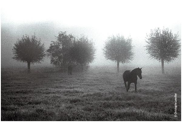 Photo noir et blanc chevaux dans la brume for Peintures en noir et blanc